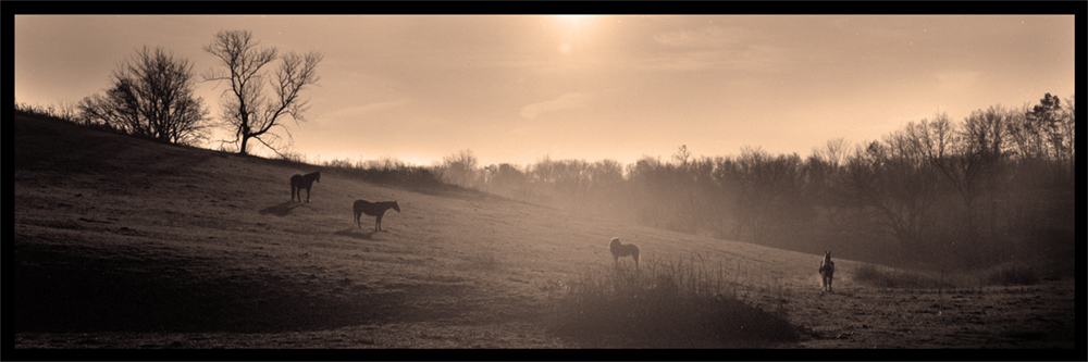 Four Horses on Backlit Hill_web.jpg