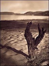 Pepins-Shore-Driftwood.jpg