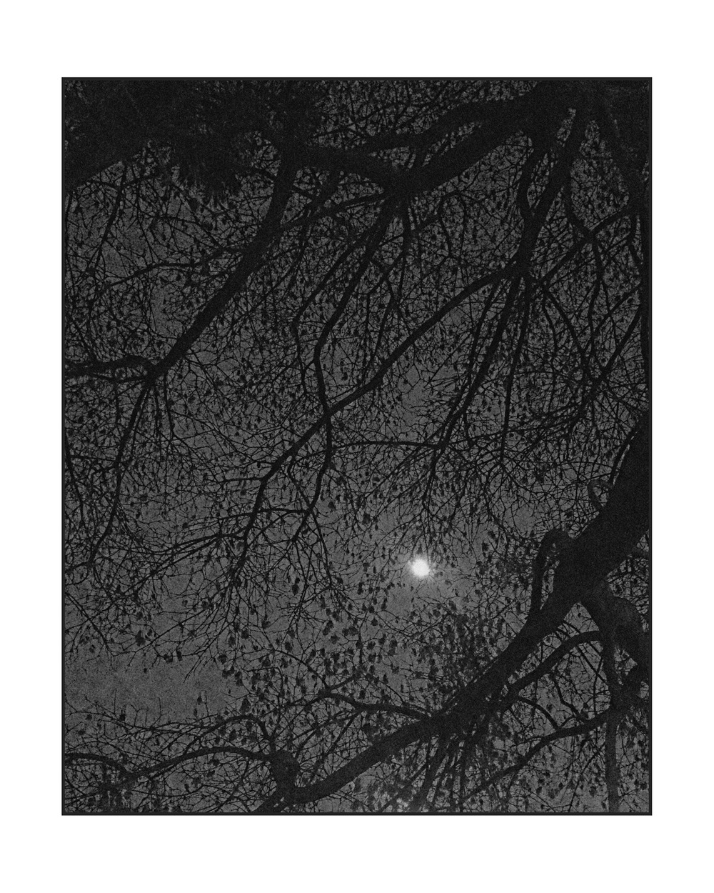 160219_Moon_Through_Naked_Tree_web.jpg