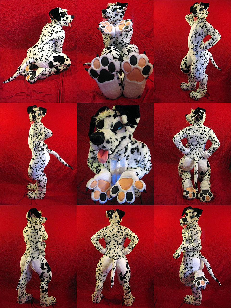 dalmatian9web.jpg
