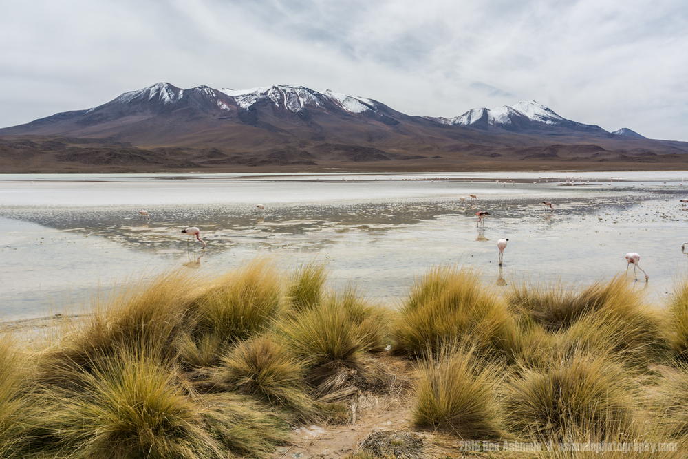 Lake Flamingos 2, Lake Chiar Kota, Bolivian Highlands
