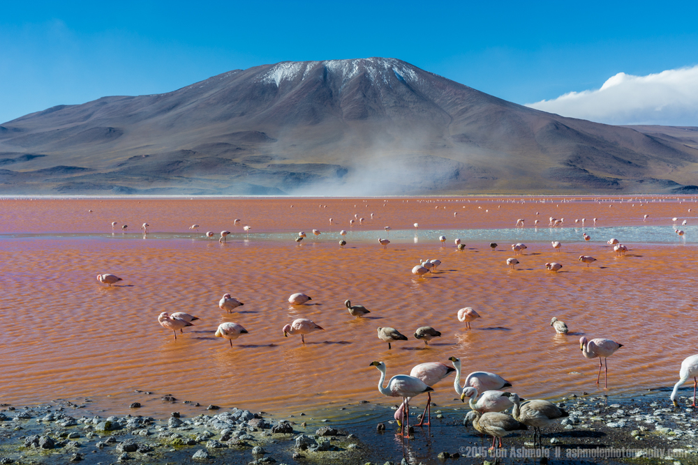 Flamingo Mountain, Lago Colorada, Bolivian Highlands