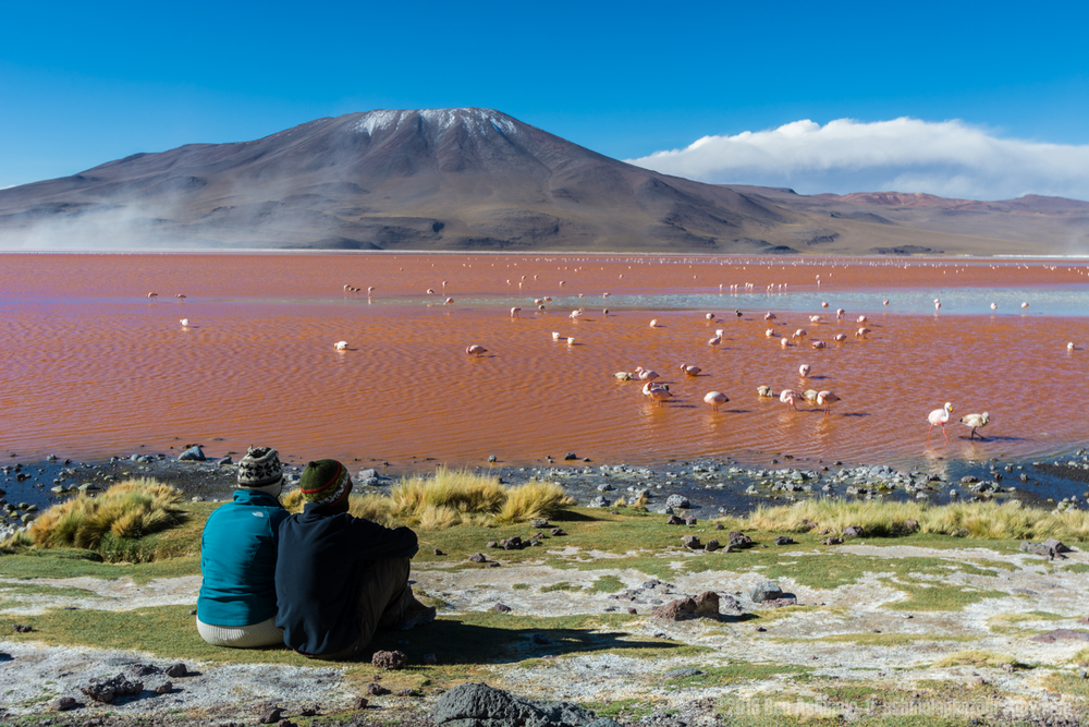 Watching The Flamingos, Lago Colorada, Bolivia