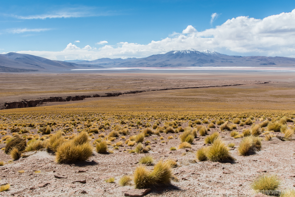 Desert Canyon Lands, Bolivian Highlands