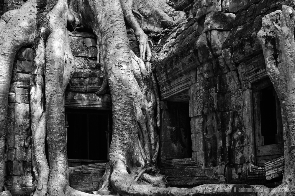 Overgrown, Ta Prohm, Angkor, Cambodia, Ben Ashmole