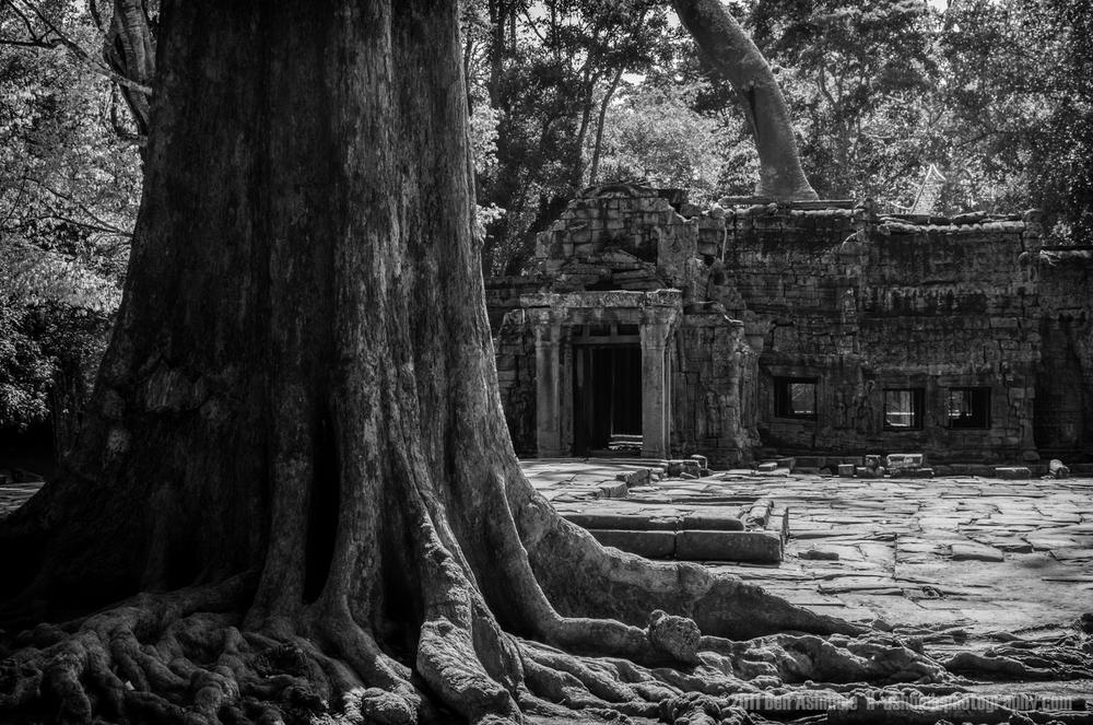 Overgrown Temple, Ta Prohm, Angkor, Cambodia, Ben Ashmole