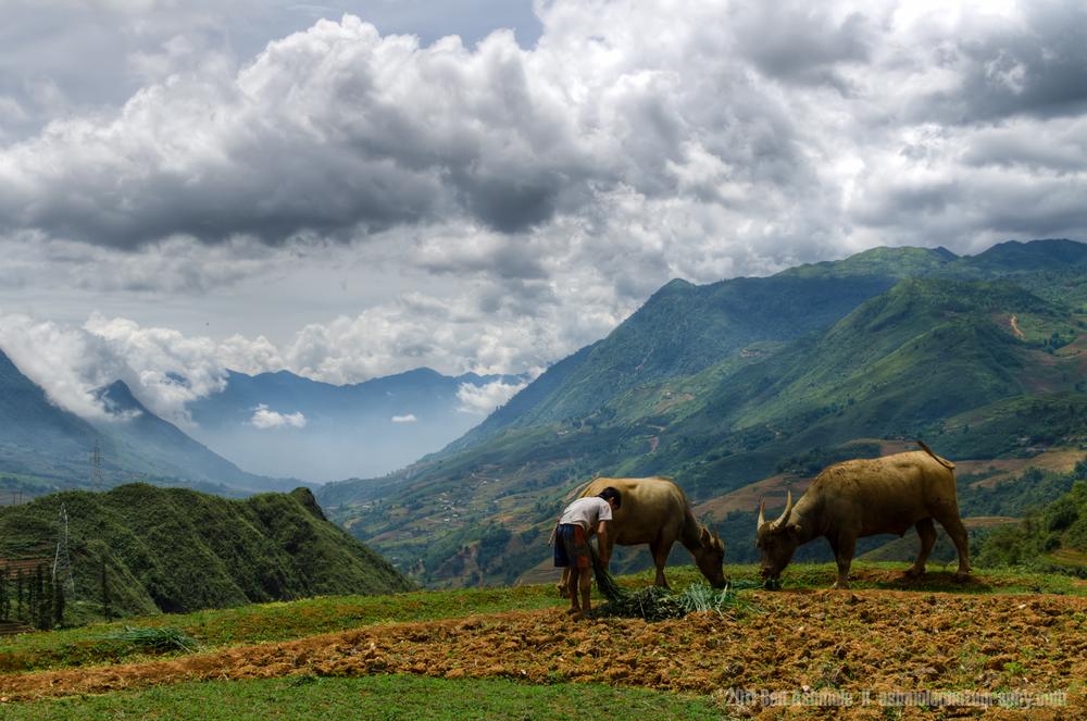 Tending the Water Buffalo, Sapa, Vietnam, Ben Ashmole