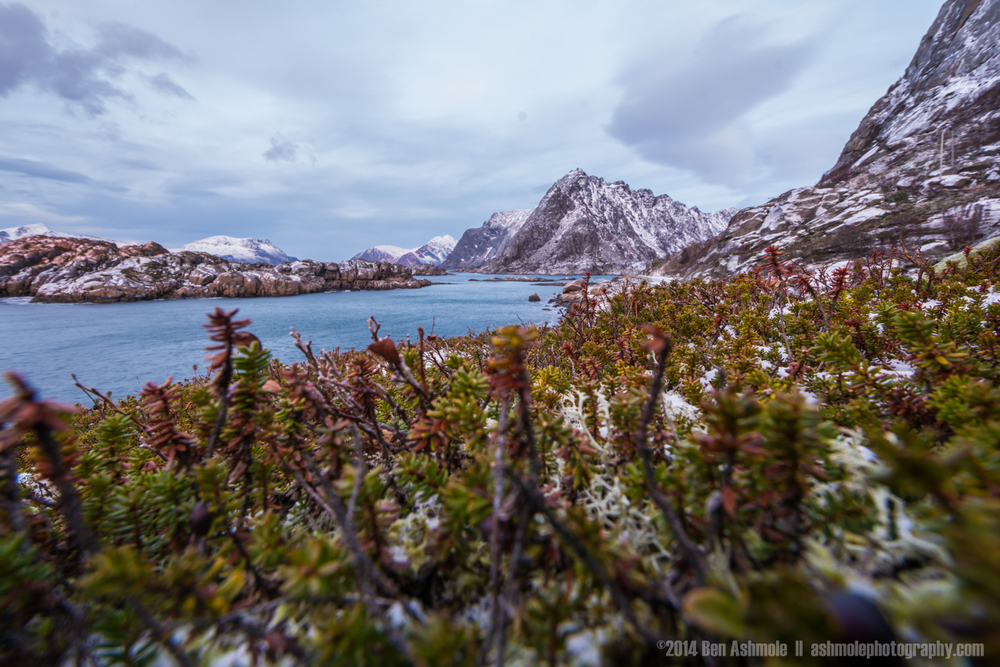 Winter Colours, Lofoten Islands, Norway