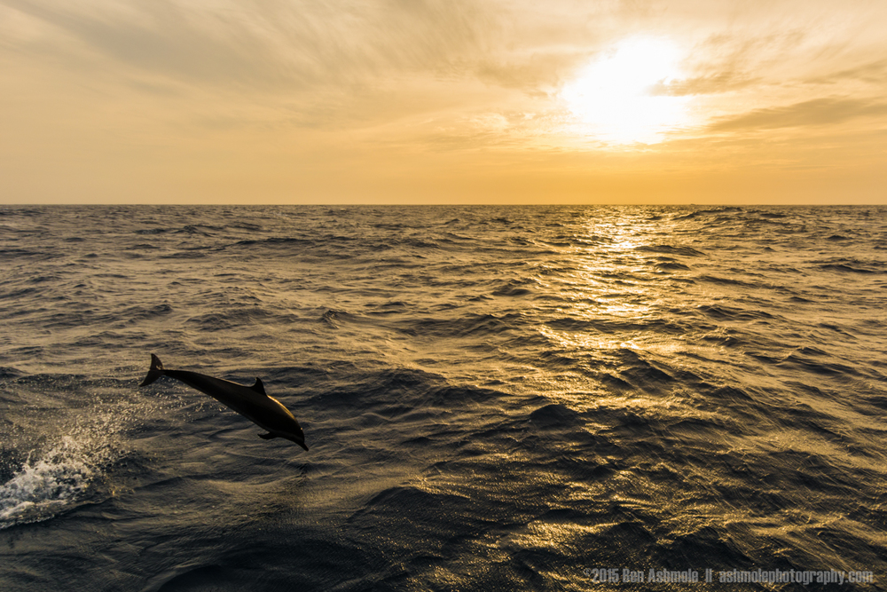 Sunset And Dolphin, San Blas, Panama