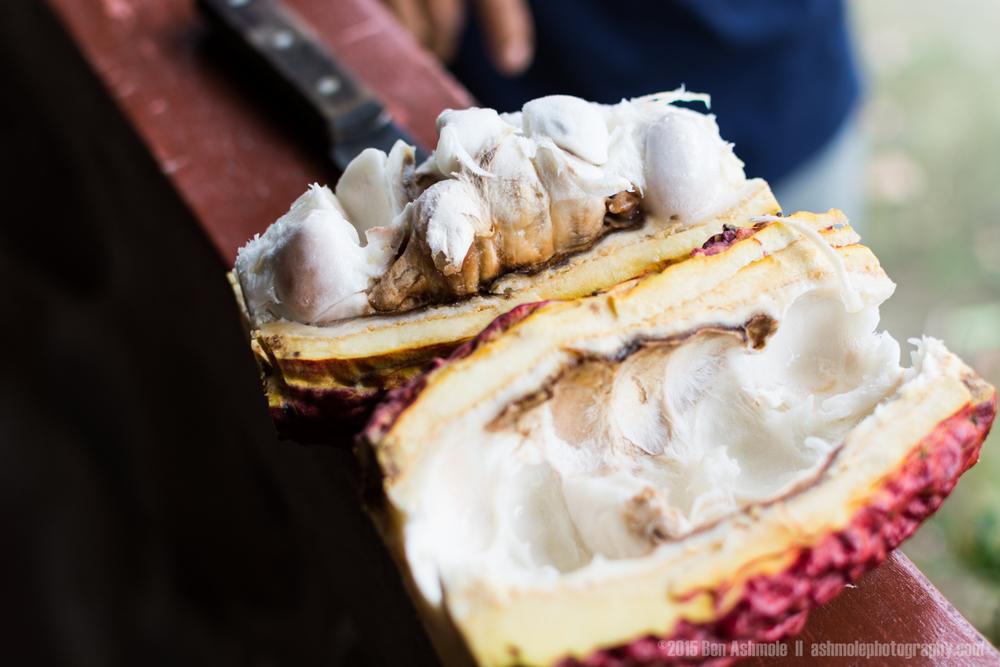 Fresh Cacao, Tena, Ecuador
