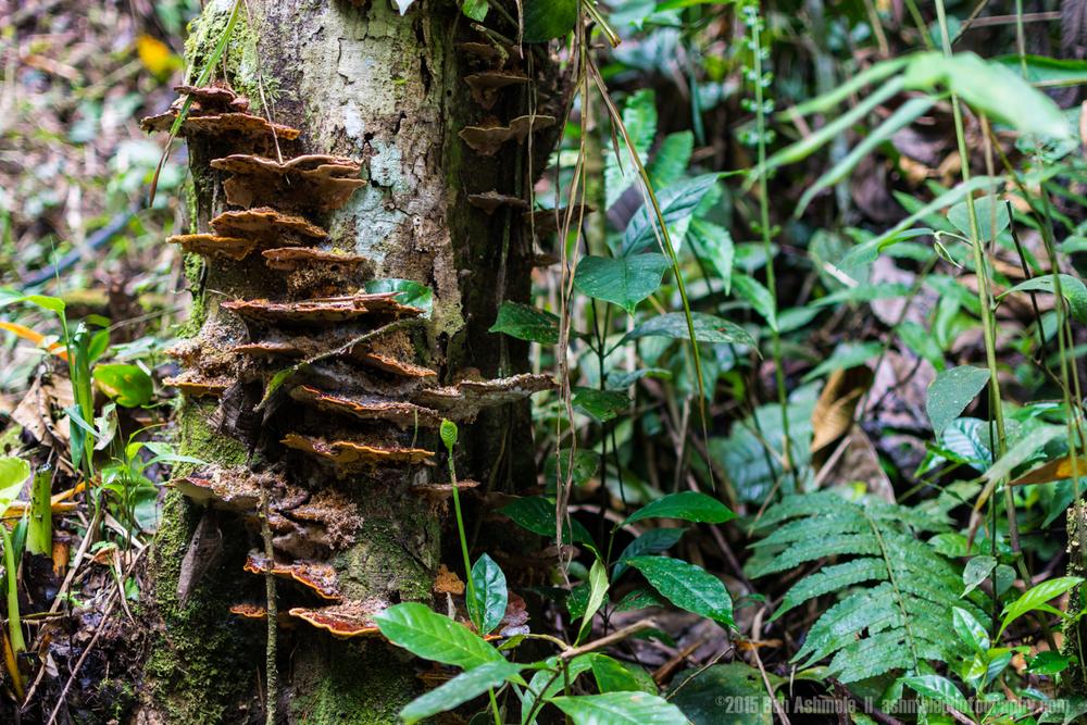 Jungle Mushrooms, Amazon Rainforest, Tena, Ecuador