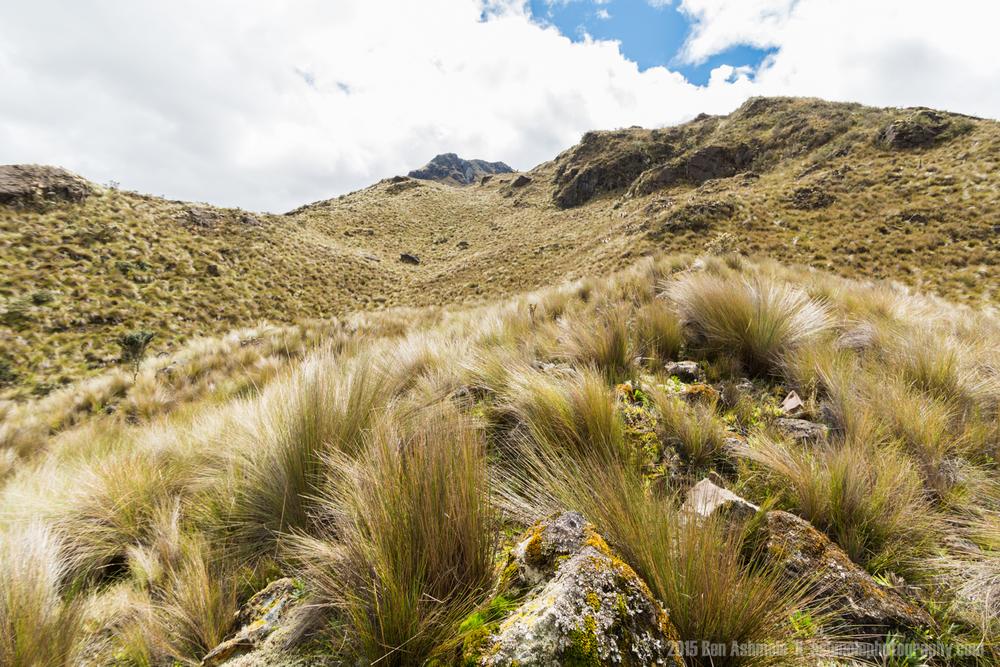 Cajas National Park 7, Ecuador