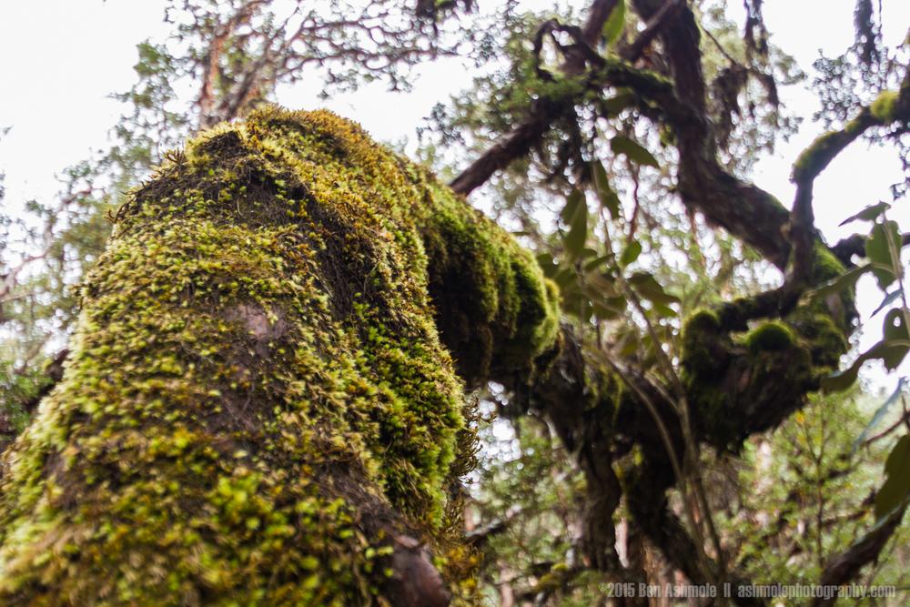 Cajas National Park 3, Ecuador