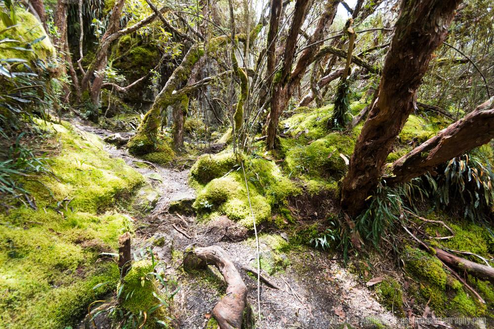 Cajas National Park 4, Ecuador
