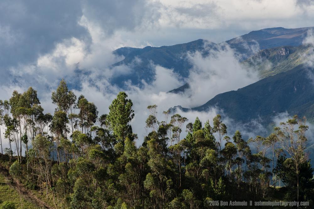 Mountain Forest, Quilotoa Loop, Ecuador