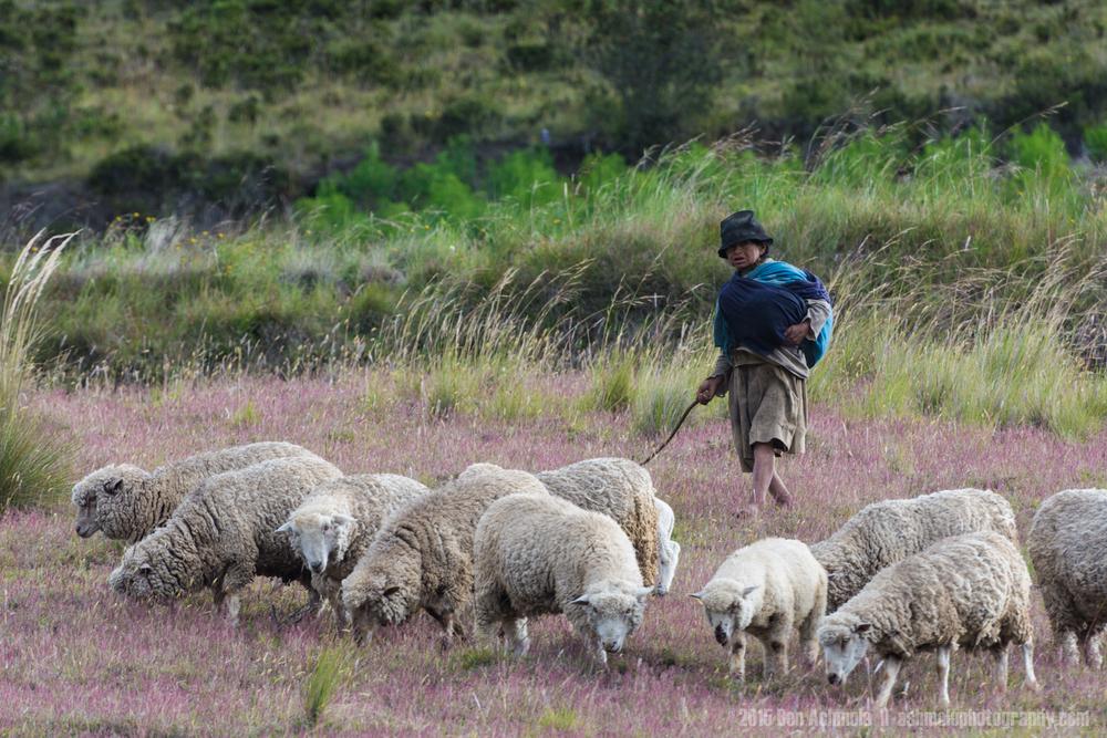 Shepherd, Quilotoa Loop, Ecuador