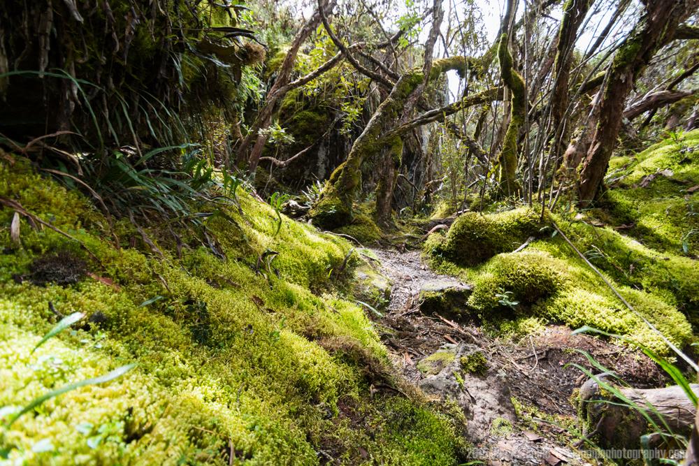 Cajas National Park 5, Ecuador