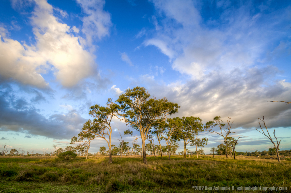 The Bush, Queensland, Australia, Ben Ashmole