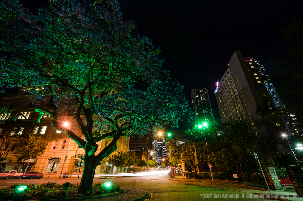 The Jacaranda Tree at Night, Brisbane, Australia, Ben Ashmole