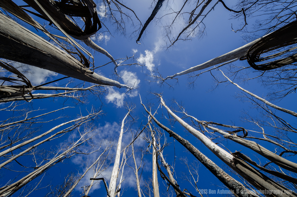 To The Sky, Blue Mountains, New South Wales, Australia