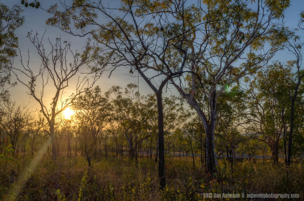 Bush Forest Morning, Katherine Gorge, NT, Australia