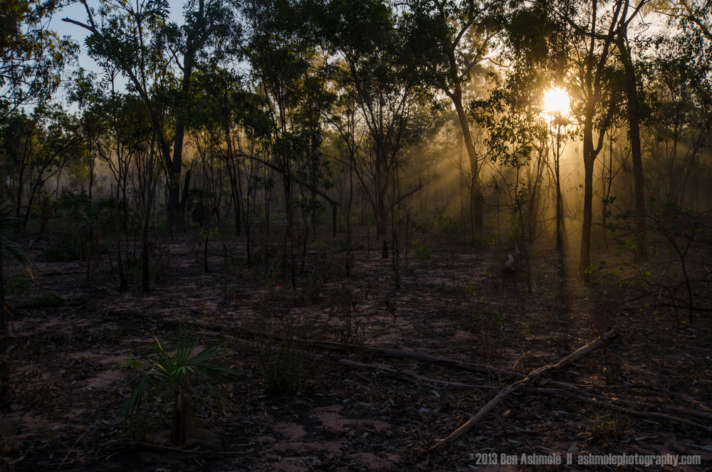 Light In The Forest 3, Kakadu National Park, NT, Australia