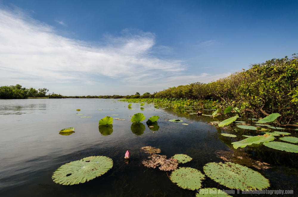 The Mary River Wetlands,  Litchfield National Park, NT, Australi