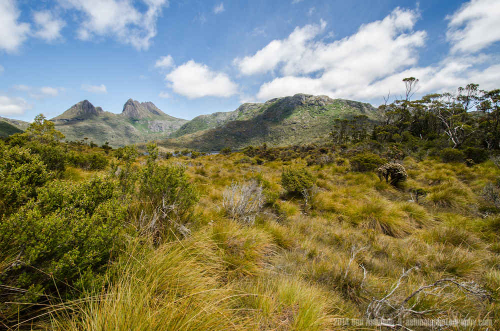 The Wilds Of Cradle Mountain, Tasmania, Australia