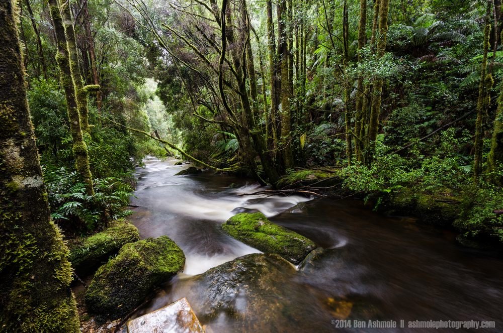 Forest Stream, Mt Field National Park, Tasmania, Australia