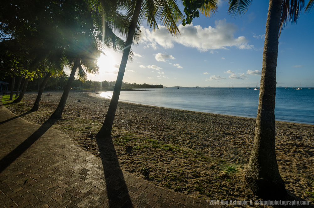 Through The Palm Trees, Airlie Beach, Whitsundays, Australia