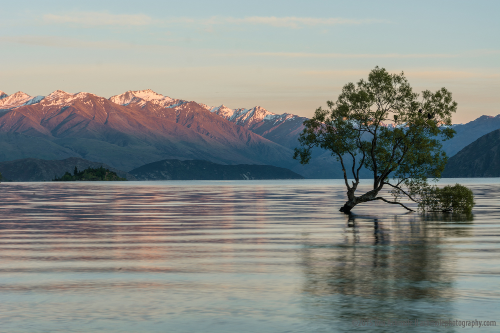 That Tree, Wanaka, New Zealand