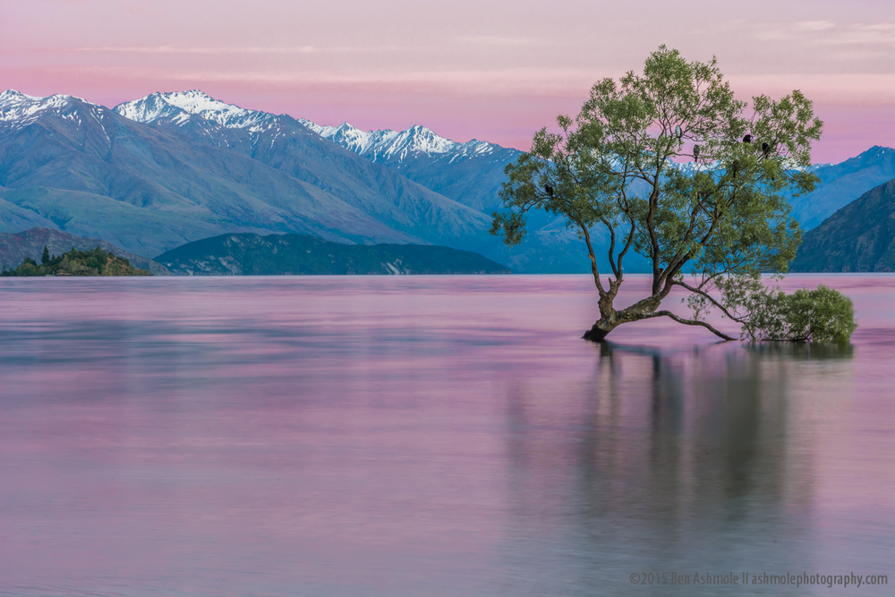 That Tree Before Sunrise, Wanaka, New Zealand