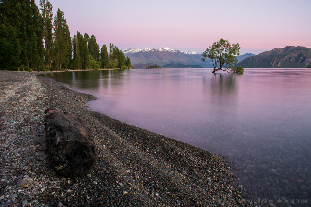 That Tree Before Sunrise 2, Wanaka, New Zealand
