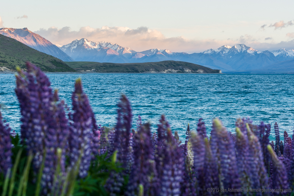 Glancing Across The Lake, Tekapo, New Zealand