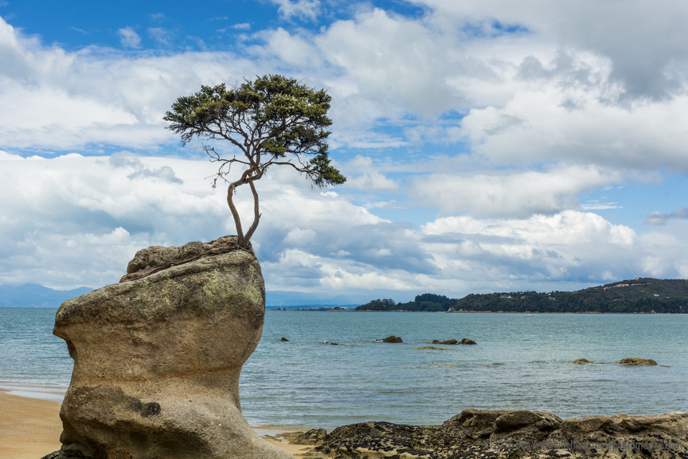 The Unlikely Tree, Abel Tasman National Park, New Zealand