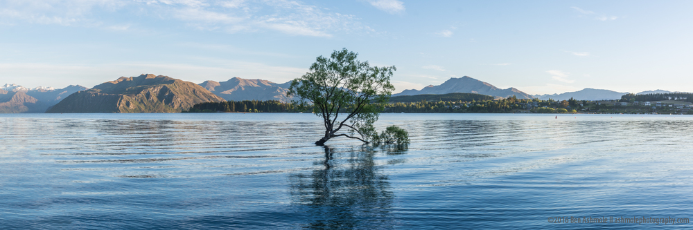 That Wanaka Tree Panorama, Wanaka, New Zealand