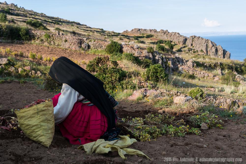 Andean Lady Faming, Amantani Island, Lake Titicaca, Peru