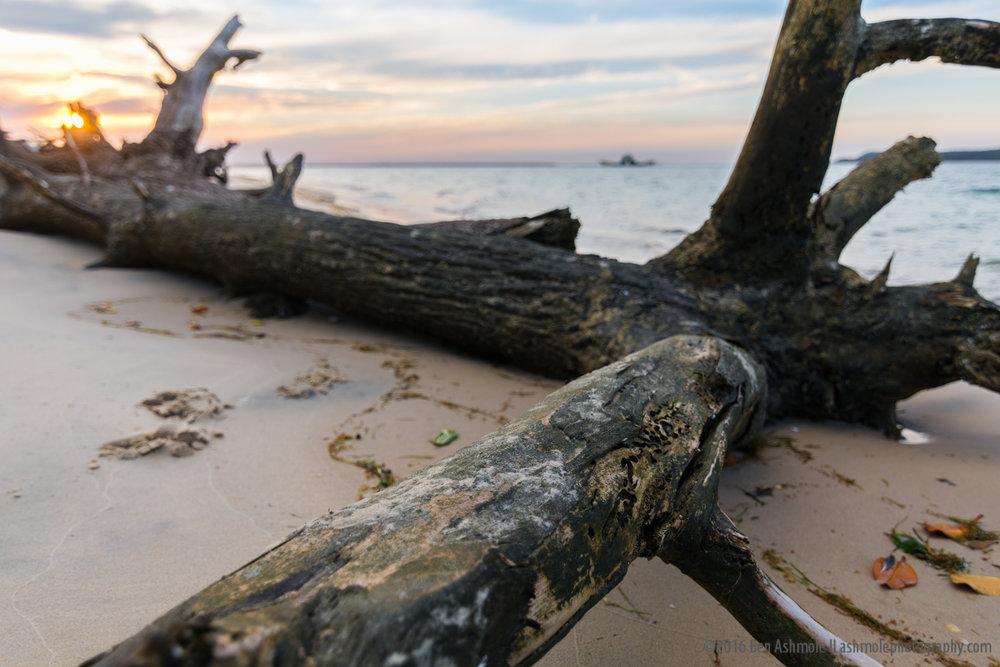 Driftwood 2, Rainbow Beach, Queensland, Australia