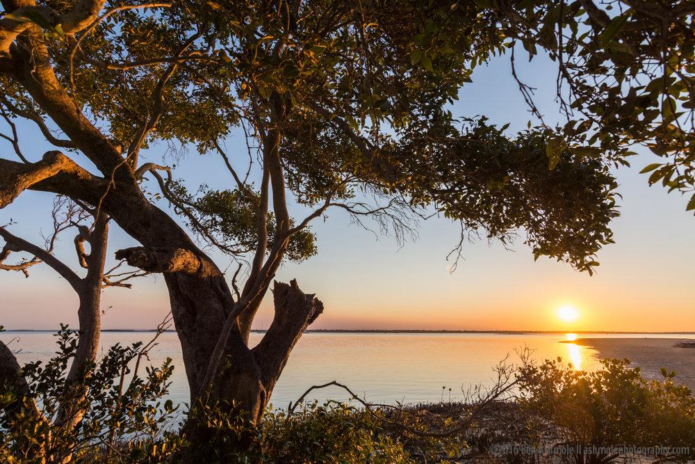Beach Tree Sunset, Rainbow Beach, Queensland, Australia