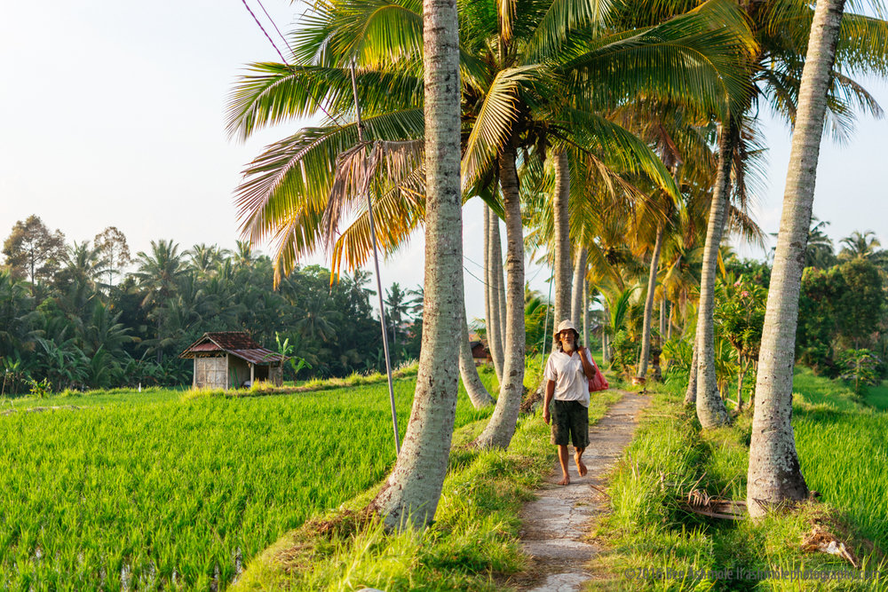 Walking Through Rice Fields 2, Ubud, Bali, Indonesia