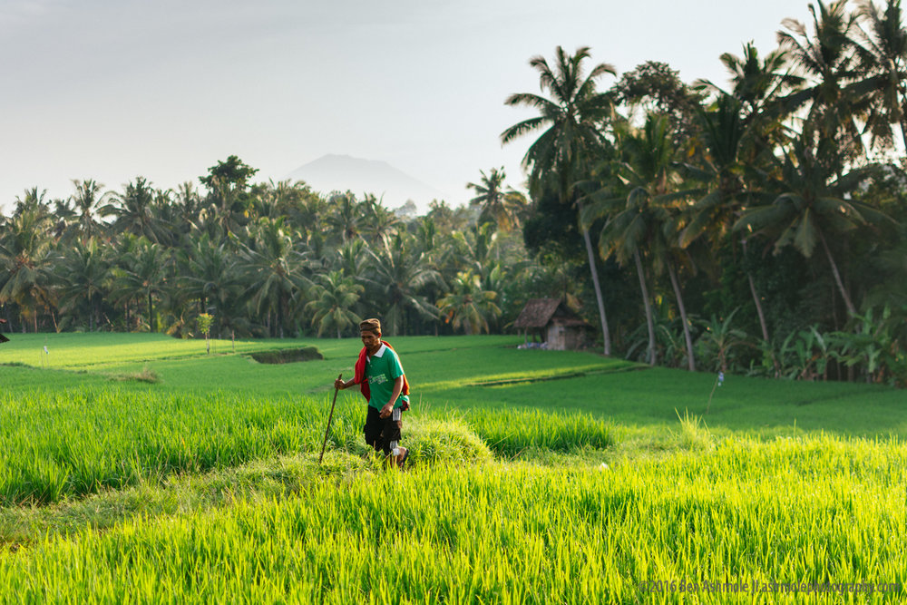 Walking Through Rice Fields, Ubud, Bali, Indonesia
