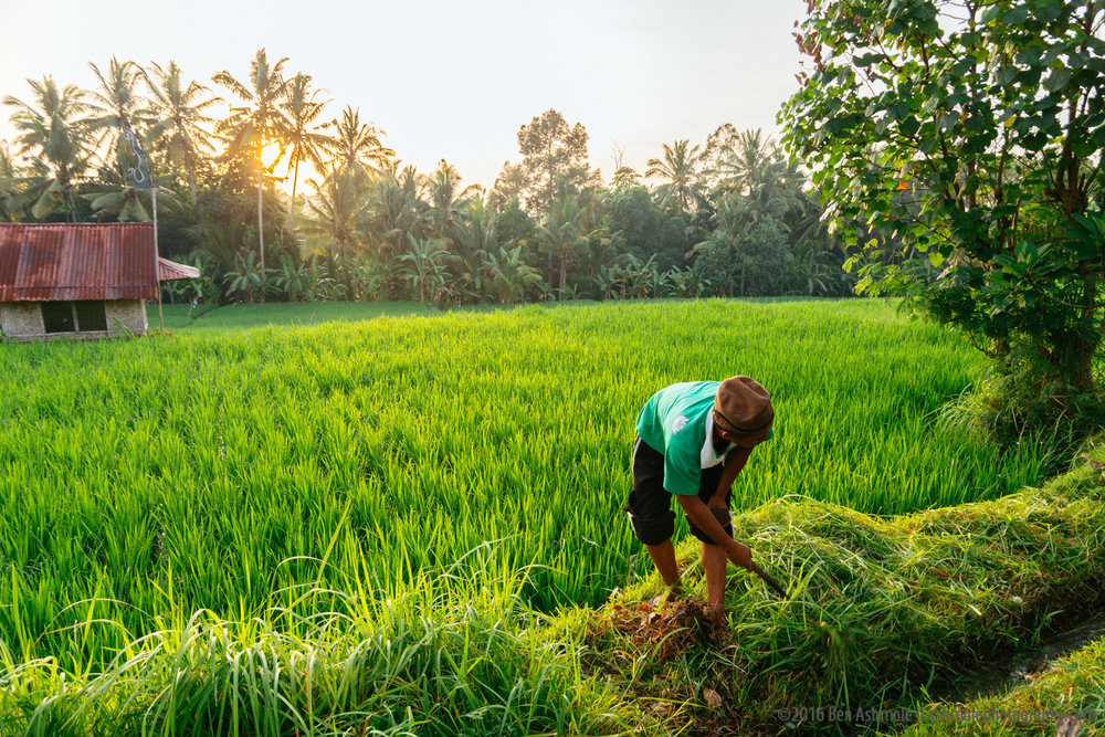 Morning Work 2, Ubud, Bali
