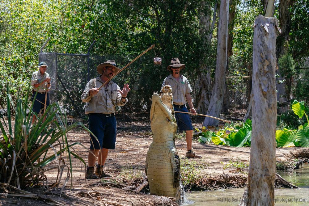 Billabong Sanctuary, Townsville, Australia, Ben Ashmole-5