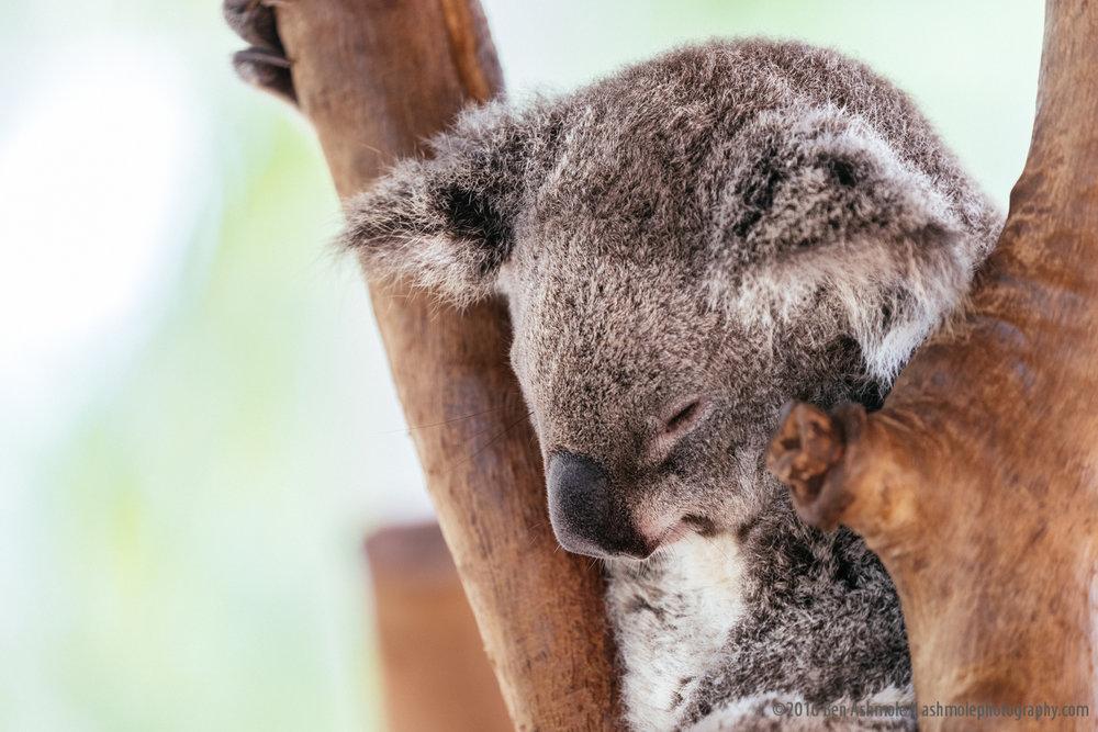 Billabong Sanctuary, Townsville, Australia, Ben Ashmole-3