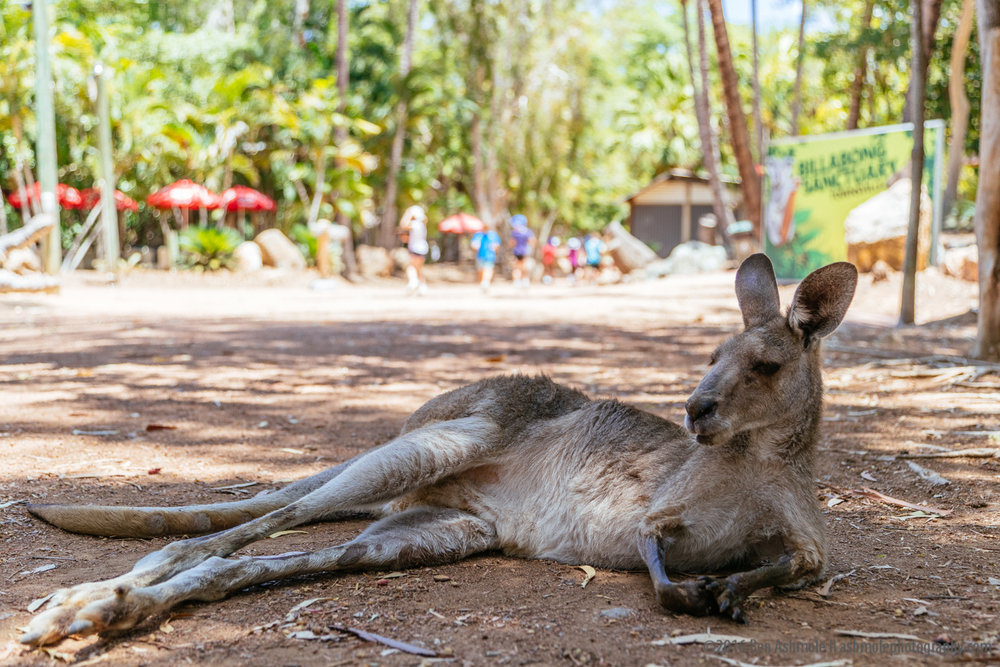 Billabong Sanctuary, Townsville, Australia, Ben Ashmole-1