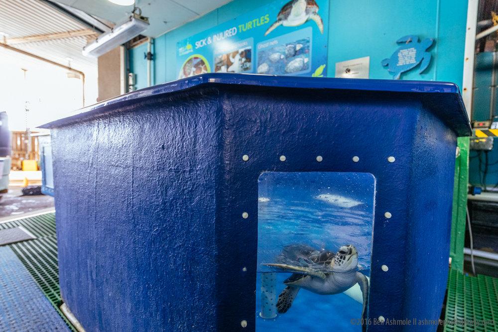 Reef HQ Aquarium, Townsville, Australia, Ben Ashmole-5
