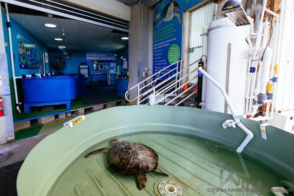 Reef HQ Aquarium, Townsville, Australia, Ben Ashmole-4