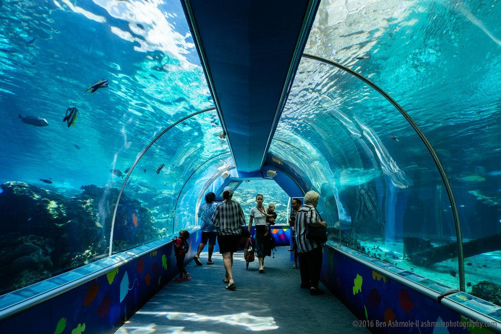 Reef HQ Aquarium, Townsville, Australia, Ben Ashmole-3