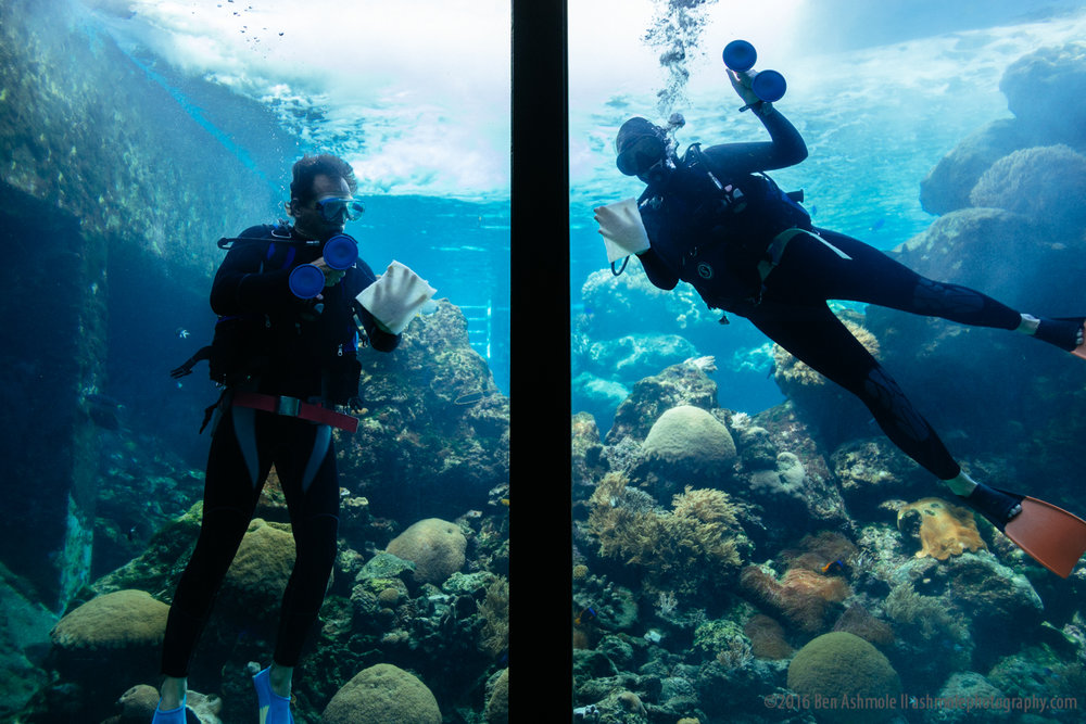 Cleaning The Tank, Reef HQ Aquarium, Townsville, Australia