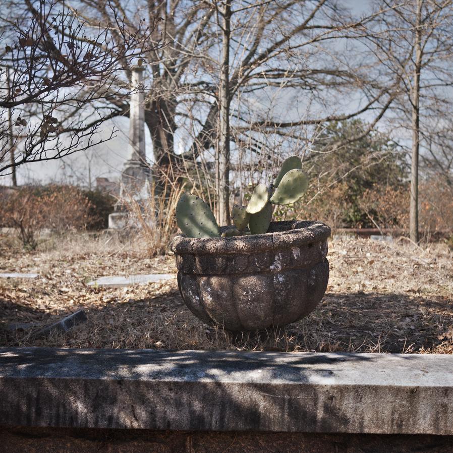Cactus Headston